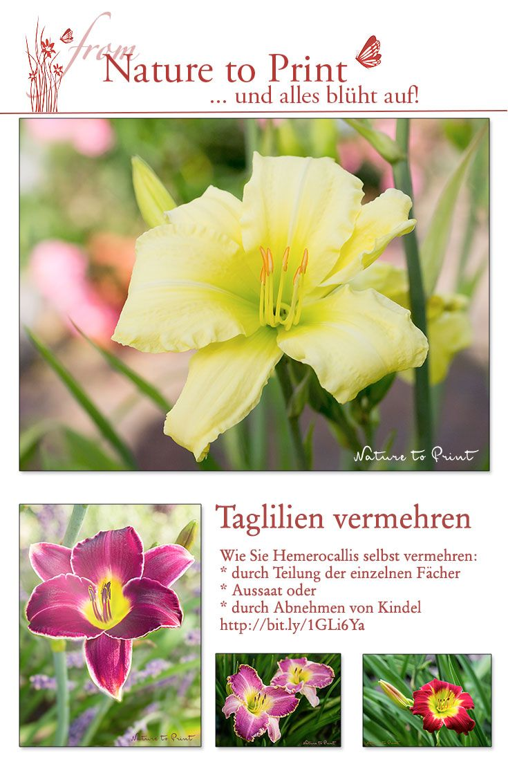 1000+ ideas about Sommerblumen on Pinterest.