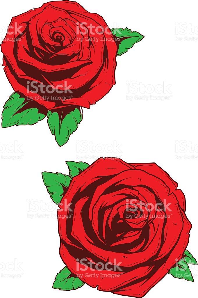 Zwei Echte Schönen Rosen Mit Grünes Blatt Vektor Illustration.