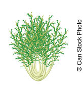 Sonchus Clip Art Vector and Illustration. 5 Sonchus clipart vector.