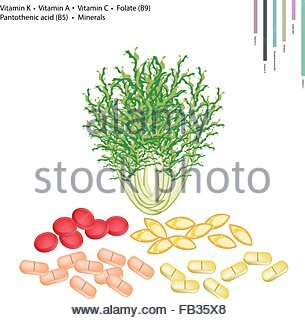 Sonchus Stock Photos & Sonchus Stock Images.