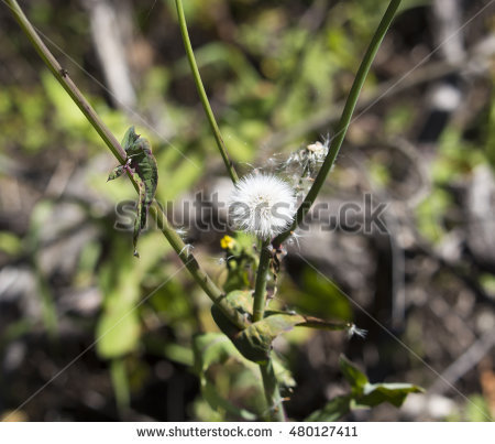 Annual Weeds Stock Photos, Royalty.