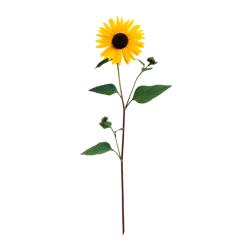 Kostenlose Sonnenblume Bilder, Clipart, Gifs, Grafiken, Images.