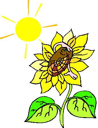 Sonnenblume Cliparts.