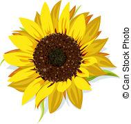 Sonnenblume Illustrationen und Clip.
