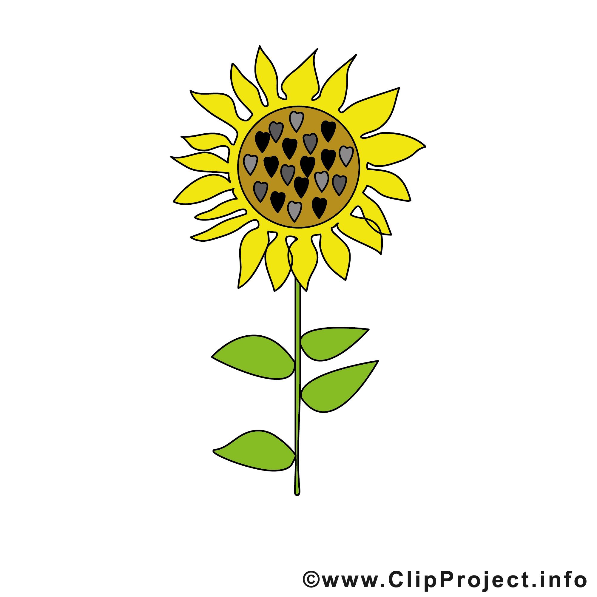Sonnenblume Bild Clipart kostenlos.