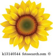 Sonnenblume Clip Art Vektor Grafiken. 7.424 sonnenblume EPS.