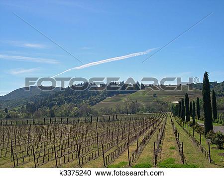 Stock Photography of Sonoma Vineyard k3375240.