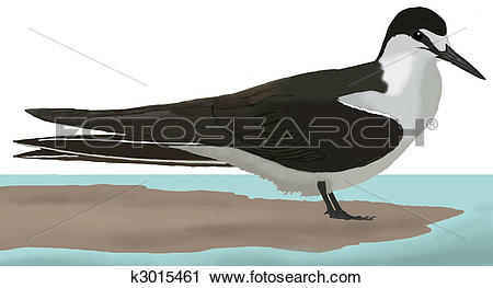 Clipart of Sooty Tern k3015461.