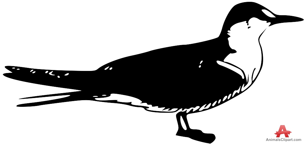 Sooty Tern Clipart Drawing.