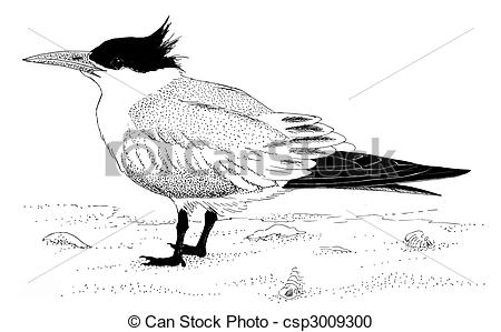 Tern Stock Illustrations. 957 Tern clip art images and royalty.