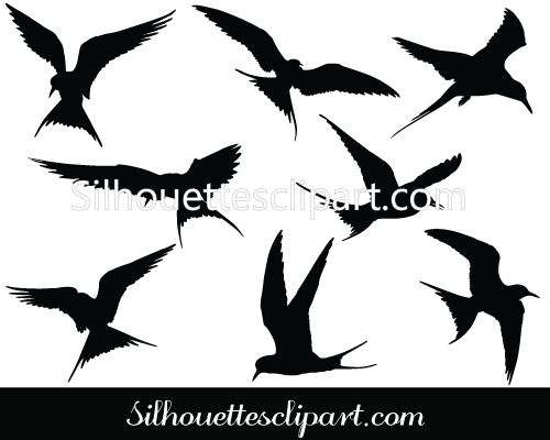 1000+ ideas about Arctic Tern on Pinterest.