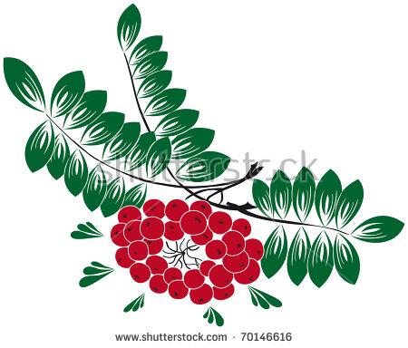 Sorbus Aucuparia Stock Photos, Royalty.