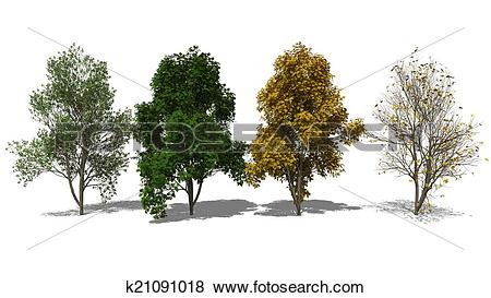 Stock Illustration of Sorbus aucuparia (Four Seasons) k21091018.