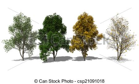 Clipart of Sorbus aucuparia (Four Seasons).