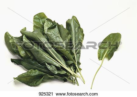 Stock Photography of Fresh sorrel leaves 925321.