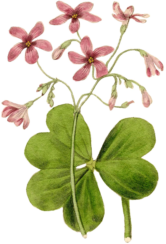 Vintage Flower Image.