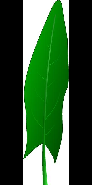 Leaf, Garden, Plant, Sorrel,.