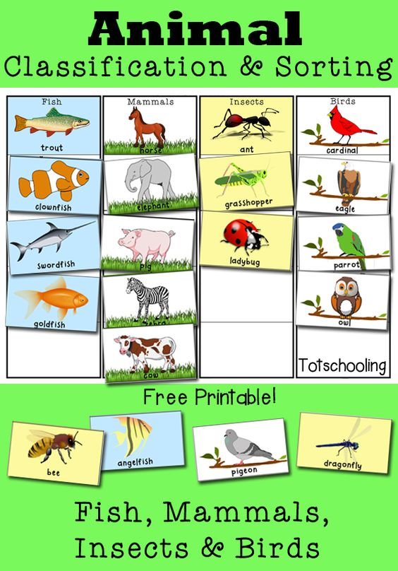 Animal Classification and Sorting Activity.