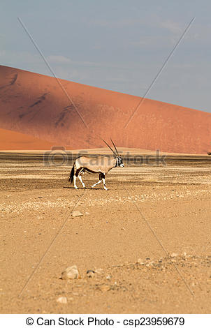 Picture of Sossusvlei park, Namibia.