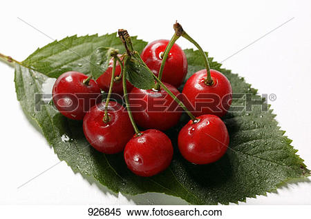 Stock Image of Several sour cherries on leaf 926845.