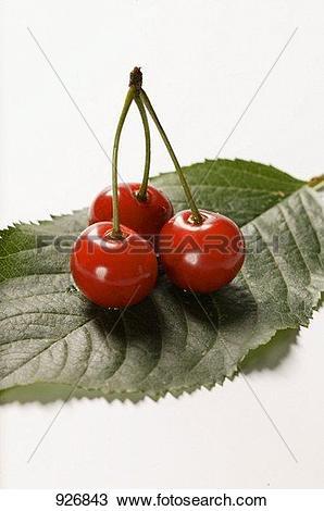 Stock Photo of Three sour cherries on stalk on leaf 926843.