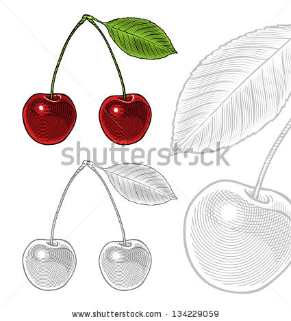 Vector sour cherry free vector download (393 Free vector) for.