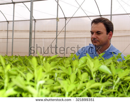 Small Processing Plant Oranges Stock Photos, Royalty.