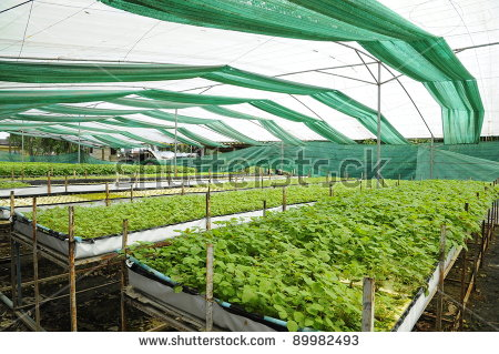 Planting Cover Crops Stock Photos, Royalty.