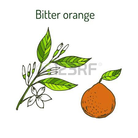 2,690 Sour Orange Cliparts, Stock Vector And Royalty Free Sour.