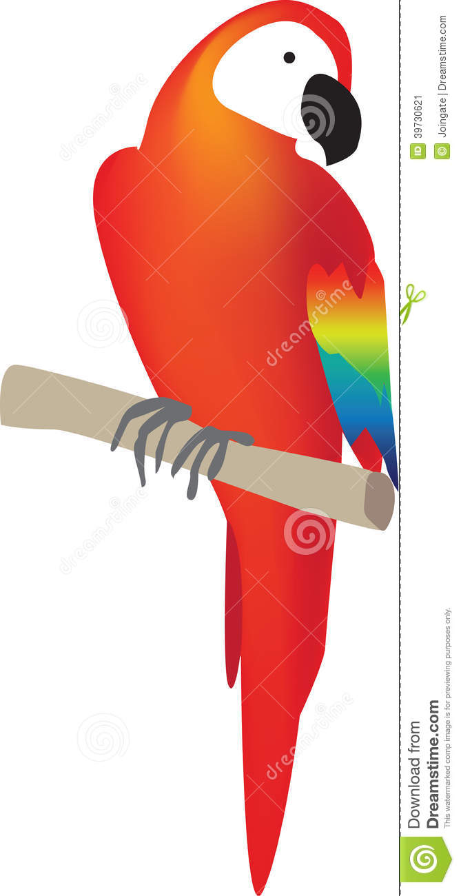 Red Parrot South American Bird Stock Vector.
