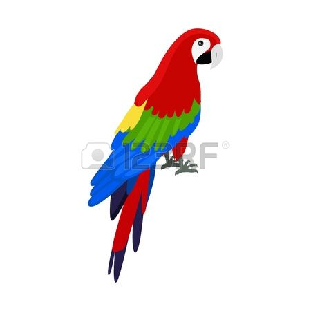 458 Amazon Parrot Stock Vector Illustration And Royalty Free.