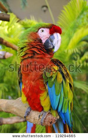 South America Parrot Stock Photos, Royalty.