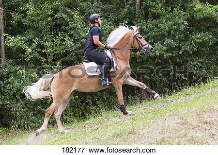 Picture of Haflinger Horse. Rider on a cross.