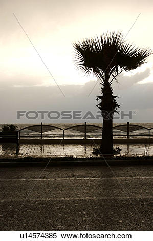 Stock Image of palm tree on Agropoli sea front at dusk in storm.