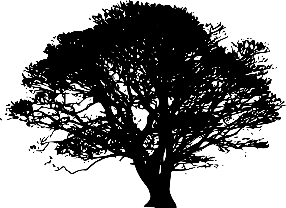 Free vector graphic: Oak, Tree, Silhouette, Black.
