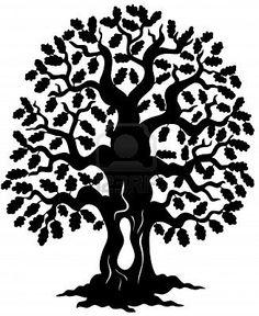 live oak.