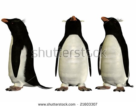 Rockhopper Penguin Stock Images, Royalty.