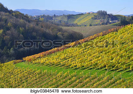 "Pictures of ""Typical landscape with vineyards in the Southern."