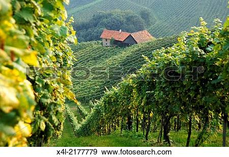 "Stock Photograph of wine route ""S?dsteirische Weinstrasse."