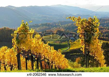Stock Images of Suedsteirische Weinstrasse, Southern Styria wine.