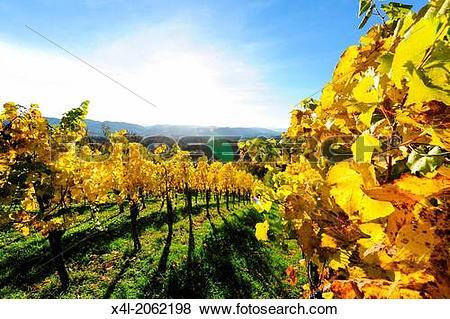 Pictures of Suedsteirische Weinstrasse, Southern Styria wine route.