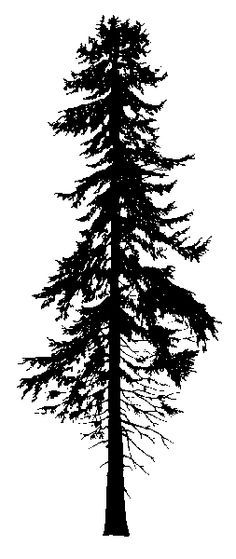 Impression Obsession Cling Stamp PINE TREES CC101.