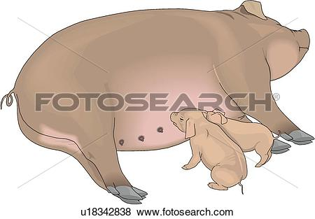 Clip Art of Sow and Piglets u18342838.