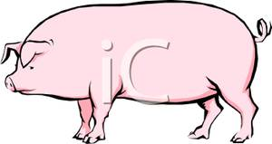 Sow clipart.