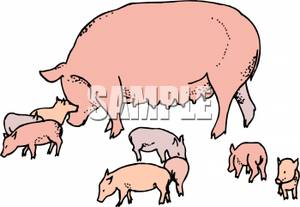 Sow clipart #17