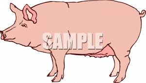 Sow clipart #16