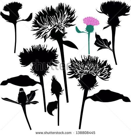 Vector sow thistle free vector download (15 Free vector) for.
