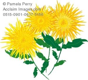 Clip Art Illustration of Yellow Chrysanthemums.