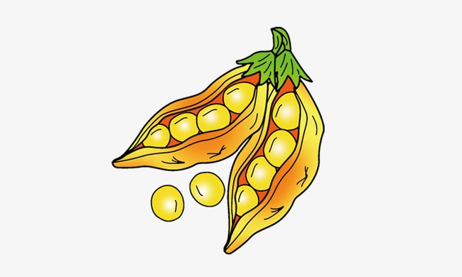 Soybean clipart 6 » Clipart Station.