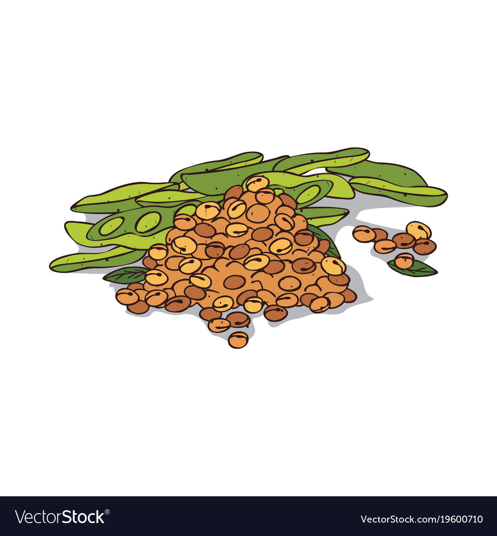 Isolated clipart soybean.